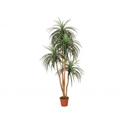 PLANTA ARTIFICIAL NOLINA